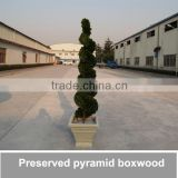 artificial preserved pyramid boxwood plant,boxwood leaf,boxwood tree