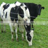 live stock cattle for beef