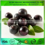 Acai berry powder extract wholesale
