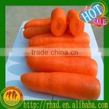 Inquiry about fresh carrot company in china