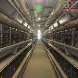 Ecuador Poultry Farming Battery Chicken Cage & Poultry Cage & Small Layer Cage Used in Brooding Room
