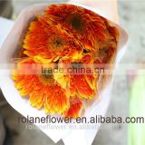 Lovely best flowers high quality tropical flowers wooden vase with 0.6-0.8kg/bundle from Yunnan, China