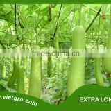 High Yield F1 Hybrid Bottle Gourd Seed - EXTRA LONG 07