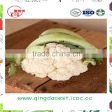 hot sale fresh cauliflower with high quality floret dia:40-60mm