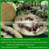 China High Quality Delicious Black melon Seeds for Your Best Choice