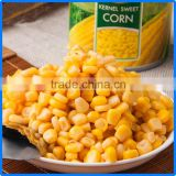 non gmo corn in can rich in protein