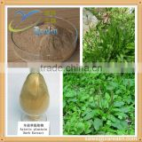 High Quality Herbal Plantaginis