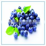 Frozen IQF natural blueberry with low price