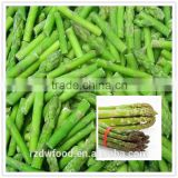 IQF Frozen green asparagus section-L:3-5cm/as per