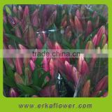 Pure and mild flavor exquisite <b>Yunnan</b> Kunming cut flowers Oriental Hybrid Lily