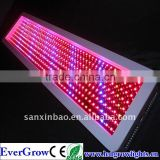 Hot Sell 5. Blue LEDs can easily be added to enhance vegetative growth , red LEDs a400W High Power Led Plant Growth Light EG400