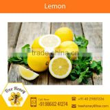 Fresh Yellow/Green Lemons for Food Flavouring from Industry's Best Supplier