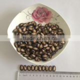 Chinese black watermelon seeds in big size