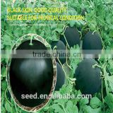 Maria Chinese black skin and diploid watermelon seeds