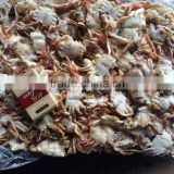 Frozen Sand Crab for canning ( Ovalipes punctatus)
