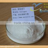 Food additives collagen drink marine collagen powder 99% oem collagen powder