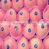China Supplier Non-Toxic Foam Fruit Packing Mesh Nets for selling well