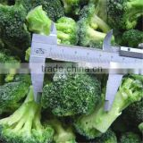 iqf frozen vegetable fresh broccoli