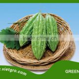 High Yield F1 Hybrid Bitter Gourd Seed GREENIE 03