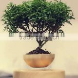 now top hot sale levitation plant pots bonsai
