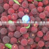 Chinese fresh waxberry