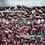 Purple Speckled Kidney Beans new 2014