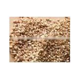 Natural Brown Sesame Seed