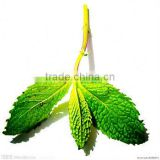 Pure Peppermint Oil 50% Menthol Oil/Chinese Peppermint Oil