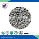 IQF blueberry planting frozen high quality top product gmo