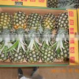 Fresh sweet pineapple/pineapples at low price