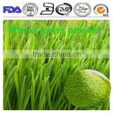 ISO 13 years factory supply Fresh organic Wheat grass powder