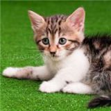 Pet Artificial Grass For Cats