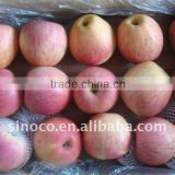 2015 Crop cold store Red Fuji Apple