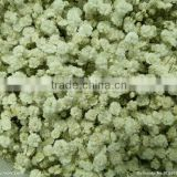 2014 Bulk Flower Seeds Gypsophila paniculata Babys breath Seeds For Growing
