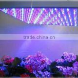 80w High quality red and Blue leds with US EU AU adapter and rope square panels sale led indoor growing light
