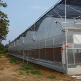Clear White Plastic Film UV Blocking Greenhouse
