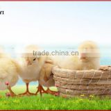 Digital Automatic Chicken Egg Incubator, Cheap Egg Incubator For Sale, 1056 Eggs Incubator