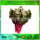 Beet leaf powder