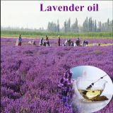 Flavour and fragrance pure natural organic lavender essential oil for body massage oil