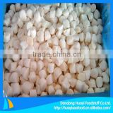 frozen scallop bay scallop supplier