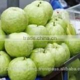 fresh guava exporters/pink ,white guava export in india/fruits supplier