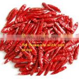 Indian Chilli with Quality
