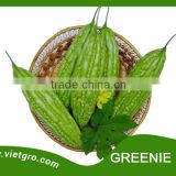 High Yield F1 Hybrid Bitter Gourd Seed Greenie 091- Gourd Seed for sale