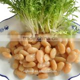 export canned sweet kidney beans white( cooked)