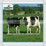 Polyvinylpyrrolidone iodine farm use