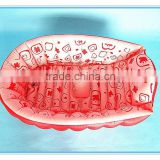 Hot sell PVC inflatable baby bath