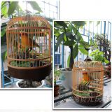 HS Group HaS Toys musical toys artcraft cage resin bird