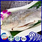 Tasty Competitive Price Fish Frozen Tilapia Gutted and Scaled
