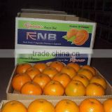 Kinno Mandarin Orange fruit from Pakistan