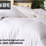 Duck down comforter manufacture Natural Soft Cheap four season down comforter
